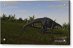 Brachiosaurus Grazing In A Grassy Field Acrylic Print by Kostyantyn Ivanyshen