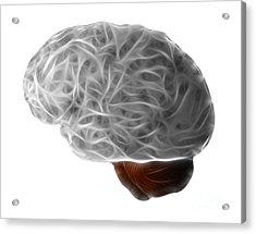Brain Acrylic Print by Michal Boubin