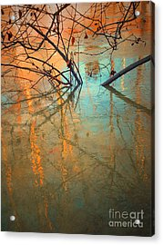 Branches And Ice Acrylic Print by Tara Turner