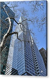 Branching Out Acrylic Print by Tony Ambrosio