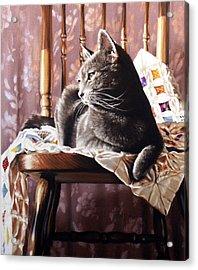 Brat Cat Acrylic Print by Dianna Ponting