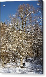 Break Under A Large Tree - Sunny Winter Day Acrylic Print by Matthias Hauser