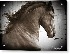 Breathless Acrylic Print by Royal Grove Fine Art