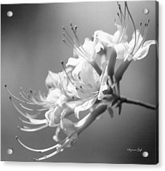 Breathtaking In Black And White Acrylic Print by Suzanne Gaff