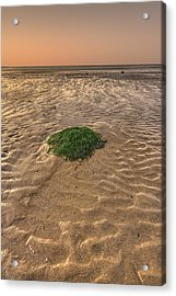 Breeze Of Dawn Acrylic Print by Evelina Kremsdorf