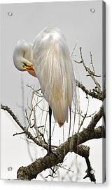 Bride Of Magnolia Acrylic Print by Donnie Smith