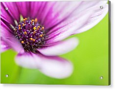 Bright Floral Display Acrylic Print by Natalie Kinnear