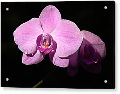 Bright Orchid Acrylic Print by Penny Lisowski