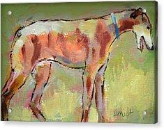 Brindle Greyhound Acrylic Print by Carol Jo Smidt