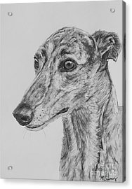 Brindle Greyhound Face In Profile Acrylic Print by Kate Sumners