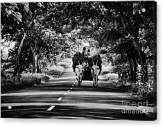 Bringing In The Harvest  Acrylic Print by Tim Gainey