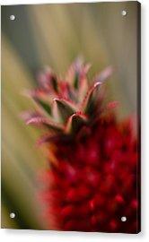 Bromeliad Crown Acrylic Print by Mike Reid
