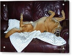 Bronson And His Ball Acrylic Print by Mary Deal