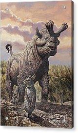 Brontops And Palaeolagus Rabbit Acrylic Print by Mark Hallett