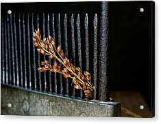 Broomcorn And Broomcomb Acrylic Print by Wilma  Birdwell