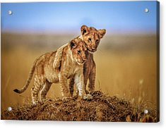 Brothers For Life Acrylic Print by Jeffrey C. Sink