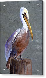 Brown Pelican Acrylic Print by Elaine Hodges
