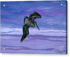 Brown Pelican Acrylic Print by Tom Blodgett Jr