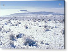 Brrrr 1021 Acrylic Print by Brent L Ander