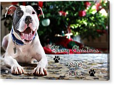 Bubba's First Christmas Acrylic Print by Shelley Neff