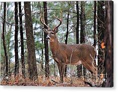 Buck Master Acrylic Print by Leslie Kirk