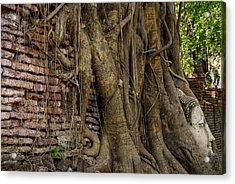 Buddha Head Encased In Tree Roots Acrylic Print by Paul W Sharpe Aka Wizard of Wonders