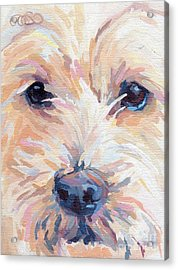 Buddy Acrylic Print by Kimberly Santini