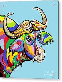 Buffalo Acrylic Print by Eloise Schneider