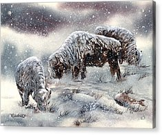 Snow Scenes In Watercolors Acrylic Print featuring the painting Buffalo In Snow by Jill Westbrook