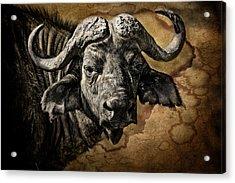 Buffalo Portrait Acrylic Print by Mike Gaudaur