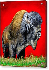 Buffalo Warrior Acrylic Print by Teshia Art
