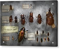 Bug Collector - The Insect Collection  Acrylic Print by Mike Savad