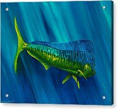 Bull Dolphin Acrylic Print by Steve Ozment
