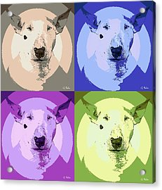 Bull Terrier Pop Art Acrylic Print by George Pedro