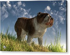 Bulldog Acrylic Print by Daniel Eskridge