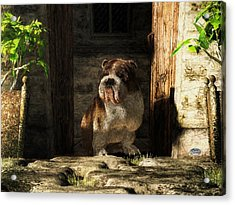 Bulldog In A Doorway Acrylic Print by Daniel Eskridge