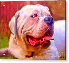 Bulldog Portrait Acrylic Print by Iain McDonald