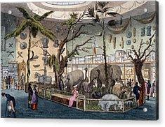 Bullocks Museum, 22 Piccadilly, London Acrylic Print by English School