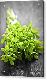 Bunch Of Fresh Oregano Acrylic Print by Elena Elisseeva