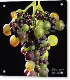 Bunch Of Grapes Acrylic Print by Bernard Jaubert