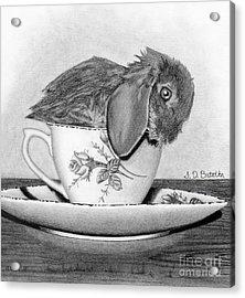 Bunny In A Tea Cup Acrylic Print by Sarah Batalka