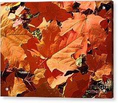 Burnt Orange Acrylic Print by Ann Horn