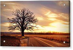 Burr Oak Silhouette Acrylic Print by Cricket Hackmann