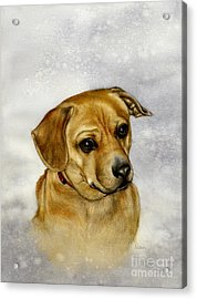 Buster Acrylic Print by Nan Wright