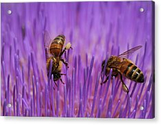 Busy Bees Acrylic Print by Kelly Jones