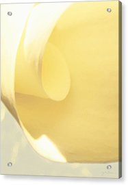 Butter Curl Acrylic Print by Julie Magers Soulen