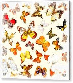 Butterflies Square Acrylic Print by Edward Fielding
