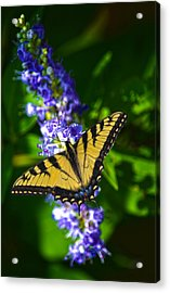 Butterflly Bush And The Swallowtail Acrylic Print by Sandi OReilly