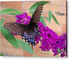 Butterfly And Friend Acrylic Print by Luther   Fine Art