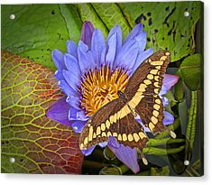 Butterfly And Lily Acrylic Print by Rudy Umans